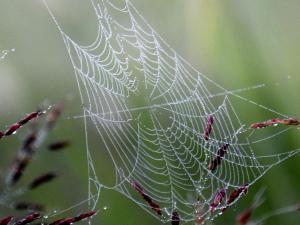 spiderweb image
